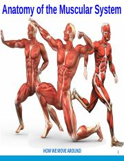 ANP1106 Topic 5_Anatomy of the Muscular System  (1).pptx