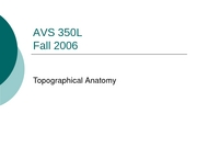 Lab_1_Topographical_Anatomy
