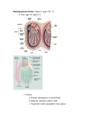 Male_Reproductive_System_with_px