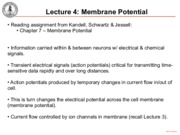 HO4-MembranePotential.pdf
