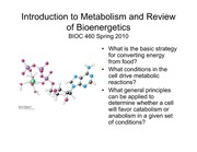 intro metabolism review bioenergetics