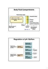 Chapter 21 and 22 Body Fluids _Urinary System