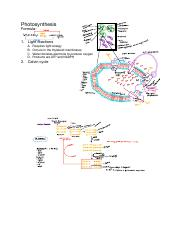 Photosynthesis notes .pdf