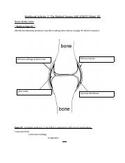 Answer Sheet for Joints (The Skeletal System) Workbook Activity