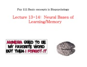 F10_L14_learning_memory_II