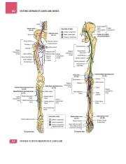 ANA407 Block 2 Lower limbs Textbook pictures