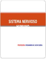 SISTEMA NERVIOS HUMANO II.ppt.pps