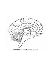 32 Blank Brain Diagram To Label - Labels Database 2020