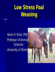 Low Stress Weaning of Foals.ppt