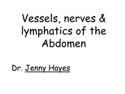 6.2 Vessels, nerves & lymphatics of the abdomen for ANAT30008 6.2