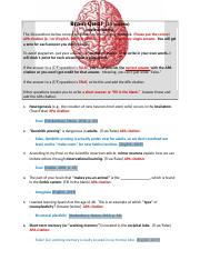 Brain Quiz, Neuro week 10.doc