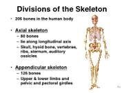 8a - Appendicular Skeleton