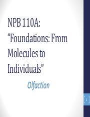 NPB 110A - Lecture 30 - Olfactory Guided Behavior (1)