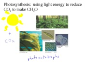 B1510_module3_7_photosynthesis_part1