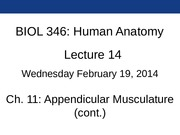 Lec14_Ch11_2-19-2014_append_muscle_2_Blackboard