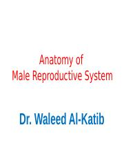 10. Anatomy of Male Reproductive System.ppt
