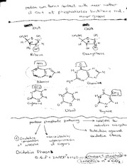 Notes on DNA proteins and phosphates