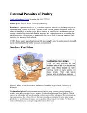 External Parasites of Poultry