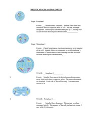 reproduction_meiosis_stages_events_key
