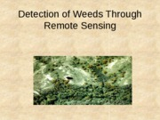 Detection of Weeds Through Remote Sensing