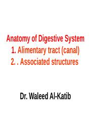 11. Anatomy of digestive system.ppt