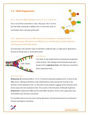 7.2 - DNA Replication