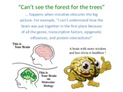 8. Neurogenesis and migration(1).pdf