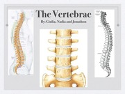 The vertebrae powerpoint