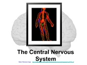 Central Nervous System Lecture