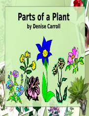 Parts of a Plant - PowerPoint.ppt