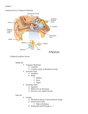 Anatomic Process of Speech and Hearing Chapter 3 notes