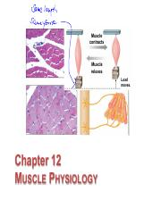 12 Skeletal Muscle Physiology slides