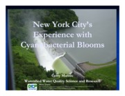 New York City's Experience with Cyanobacteria Blooms