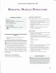 Lab_18_Muscle_Structure.pdf