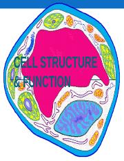3b Cell_structure_function.ppt