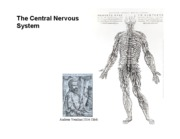 Bio_1A_Lecture_26_NervousSystem