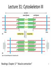 Lecture 31 - Cytoskeleton III pre.pdf