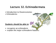 32_Goliber_Echinoderms_S13