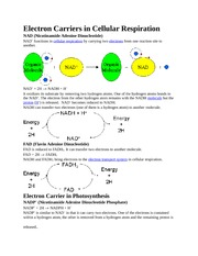 Electron Carriers in Cellular Respiration