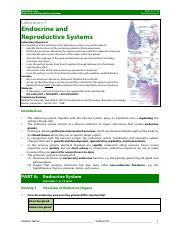 HBIA Lab 7 Endocrine & Reproductive Systems