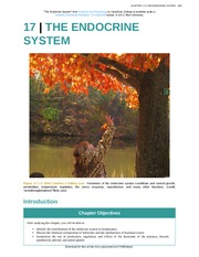 Chapter 17 - The Endocrine System