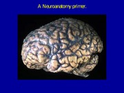 Week 2 - Neuroanatomy
