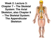 Z331 Fall 2010 Ecampus Week 2 Lecture 3 Axial Appendicular Posted
