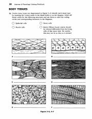 Tissue Review Worksheets Pdf 38 Anatomy Physiology Coloring