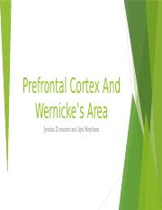 Prefrontal Cortex And Wernicke's Area