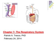 Week 8_The Respiratory System _Feb 24_2014