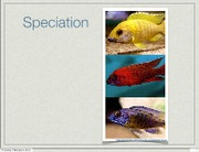 Lecture 8 Speciation