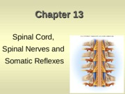 Spinal Cord, Nerves & Reflexes Class Notes