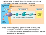 Lecture 13. Cell signaling