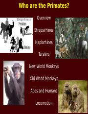 ANTH 3_module 03_lecture 10_who are the primates_S 2018.pptx